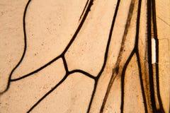 Ala de la abeja en el microscopio Fotografía de archivo