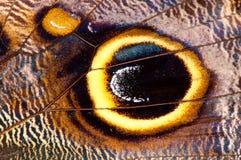 Ala de la mariposa Fotos de archivo