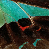 Ala de la mariposa Imágenes de archivo libres de regalías