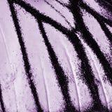 Ala de la mariposa imagen de archivo libre de regalías