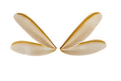 Ala de la termita del vuelo Imagen de archivo