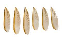 Ala de la termita del vuelo Foto de archivo