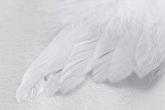 Ala del ángel Foto de archivo