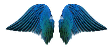 Ala del ángel azul imagen de archivo