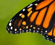 Ala del monarca Fotografie Stock Libere da Diritti