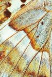Ala del primo piano della farfalla, effetto d'annata di colore Fotografie Stock Libere da Diritti