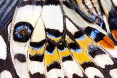 Ala della farfalla Fotografia Stock
