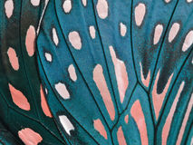 Ala della farfalla Fotografie Stock Libere da Diritti