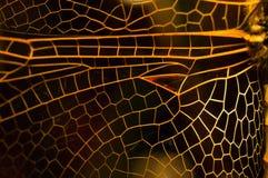 Ala della libellula Fotografia Stock