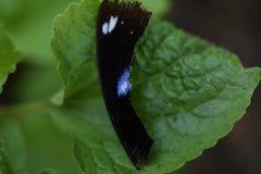 Ala di Brocken della farfalla Immagini Stock