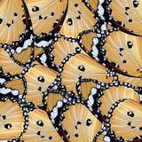 Ala exótica de la mariposa del color Imágenes de archivo libres de regalías