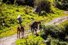 Ala Kol area- Kirgiz nature Royalty Free Stock Photo