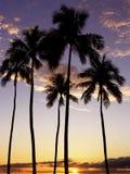 Ala Moana Palm Trees Sunset. Ala Moana Beach Park Palm trees at Sunset royalty free stock photo