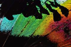 Ala multicolora de la mariposa Imagen de archivo libre de regalías