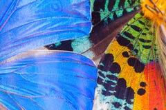 Ala multicolore delle farfalle Fotografia Stock Libera da Diritti