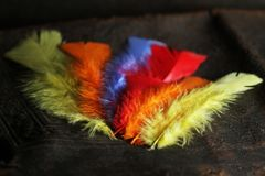 Ala variopinta della piuma, colori vivi immagini stock