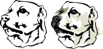 Alabai - zentraler asiatischer Schäfer Dog Stockfotos