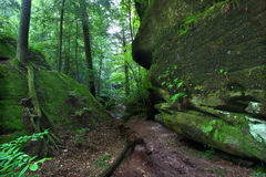 Alabama Canyon. A beautiful secluded canyon northern Alabama Royalty Free Stock Photo
