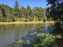 Alabama sjö Arkivbild