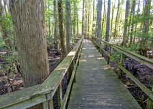Alabama state park path leads over swamp. Wooden bridge path leads through an Alabama swamp Stock Photo