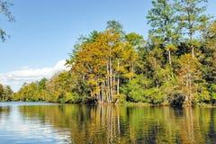 Alabama-Sumpf Lizenzfreie Stockbilder