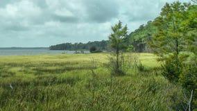 Alabama Swamp Stock Photography