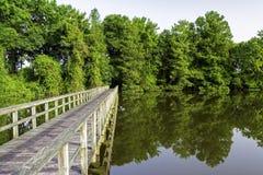 Alabama Swamp with a wooden foot bridge Stock Image