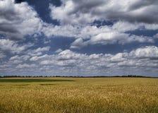 Alabama-Weizen-Felder stockbild