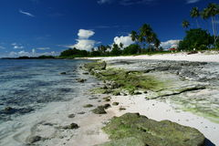 The alabaster beach in south pacific island Stock Image