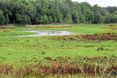 The Alachua Sink on the La Chula Trail in Paynes Prairie Florida Royalty Free Stock Image