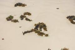 Alagae on the beach in Zanzibar stock photos