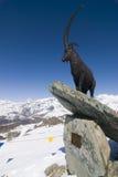 Alagna Ski Day. Sunny ski day on Alagna-Gressoney's slopes Royalty Free Stock Photos