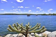 Alagoas. Brazil. The beauty  of the San Francisco River. State of Alagoas. Brazil Royalty Free Stock Photos