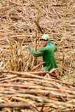 Alagoas, el Brasil, el 7 de noviembre de 2018: Caña de azúcar del corte del trabajador de granja que se enviará a la refinería lo fotos de archivo