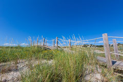 Alaior Cala Son Bou in Menorca dunes at Balearic Royalty Free Stock Photography