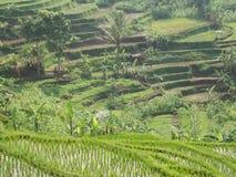 Alam印度尼西亚 免版税库存图片