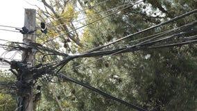 Alambre de los cordones de la electricidad y de la telefonía instalado gravemente