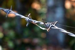 Alambre de púas con el web de araña Imagen de archivo