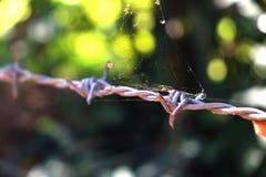 Alambre de púas con el web de araña Foto de archivo