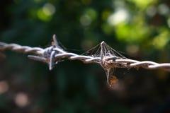 Alambre de púas con el web de araña Fotografía de archivo libre de regalías
