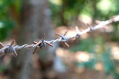Alambre de púas con el web de araña Foto de archivo libre de regalías