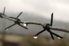 Alambre de púas con gotas de una lluvia. Imagen de archivo libre de regalías