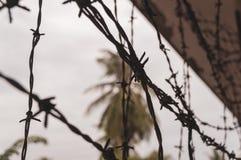 Alambre de púas con las palmeras en el fondo fotografía de archivo