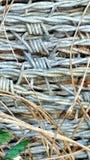 Alambre de púas macro Foto de archivo libre de regalías