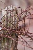 Alambre de púas oxidado en los posts rústicos de la cerca - ascendente cercano Fotos de archivo