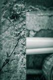 Alambre de púas viejo y polos concretos Imagen de archivo libre de regalías