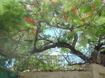 Alambre de púas y flores Imagen de archivo libre de regalías