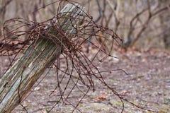 Alambre de Rusty Barbed en los posts rústicos de la cerca Imagen de archivo
