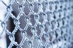 Alambre-red del metal cubierta con helada en invierno imagenes de archivo