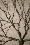 Alambre torcido que forma un árbol con un fondo texturizado foto de archivo